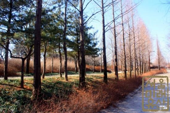 높게 뻗은 나무들