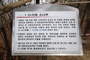 1.21사태 소나무 안내문(한글)