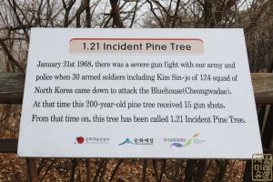 1.21사태 소나무 안내문(영문)