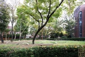 덕성여자대학교 자연관 앞 나무