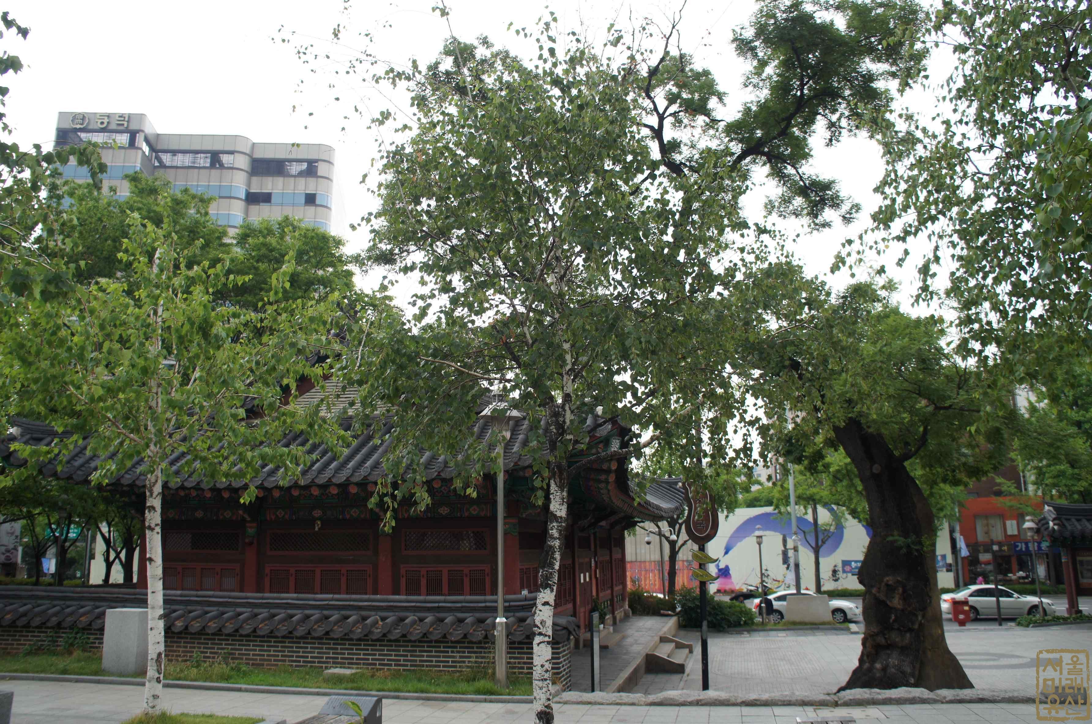 우정총국 회화나무