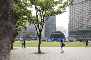 서울광장 나무