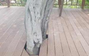 고종황제 기념식수 기둥