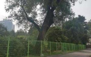 선린중·고교 나무 전경