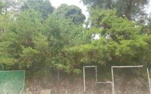 선린중·고교 나무 후면