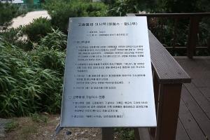 선린중고교나무_안내판