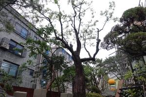 장위동-230-49-주택_대추나무