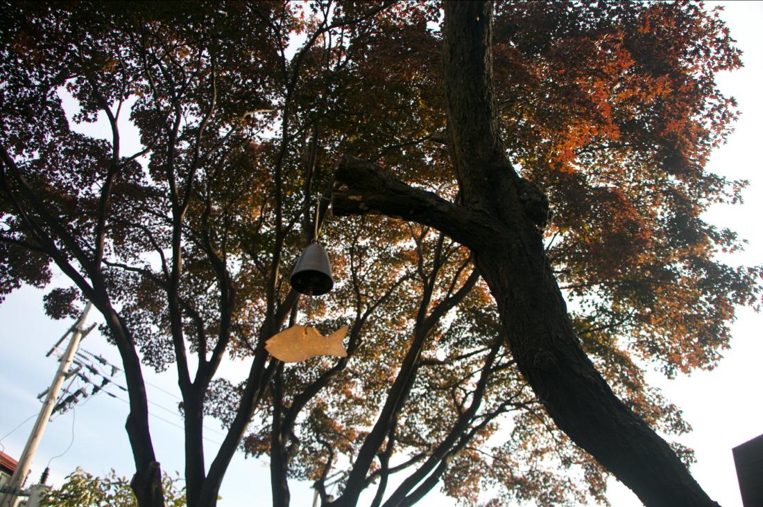 세이장(나무)